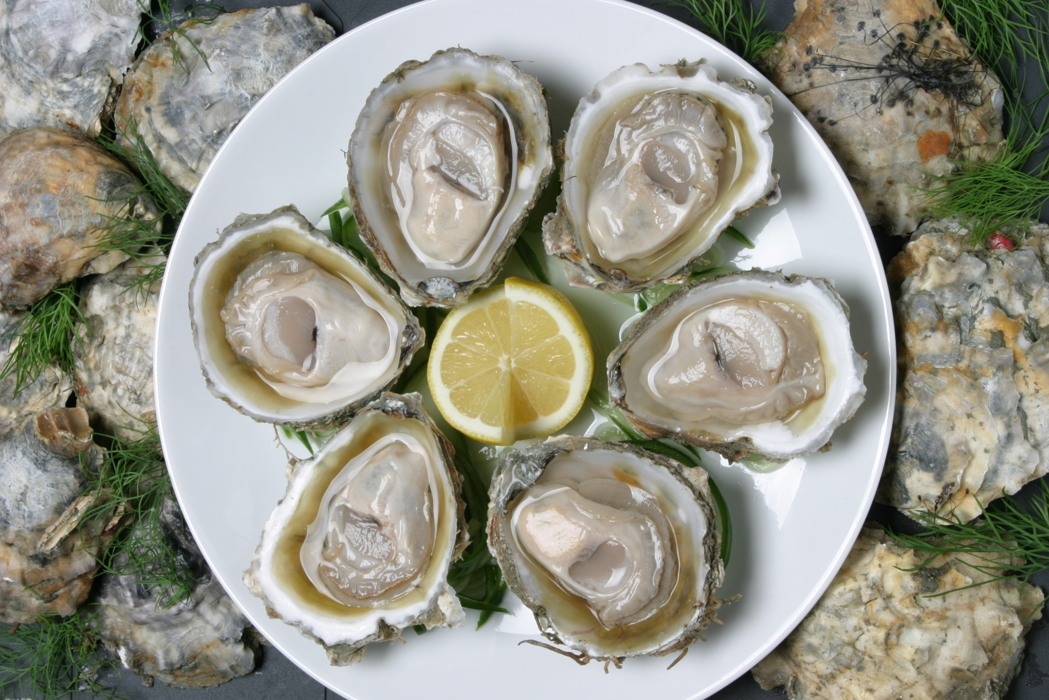 004 Oysters